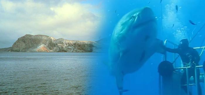 Biggest Great White Shark